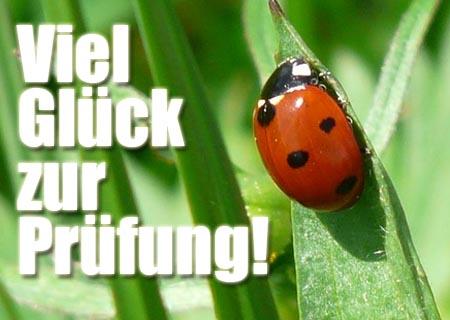 Ein Käfer als Glücksbringer